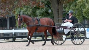 Versatility of Thoroughbreds on Display at New Vocations Show and TIP Championships