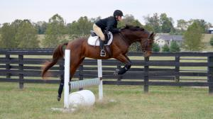 Thoroughbred Makeover Competitor Hashtag Bourbon Showing Talent for Jumps