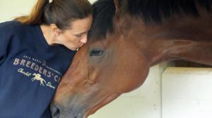Charities to Support for National Horse Protection Day