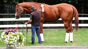 Three Ways Grayson-Jockey Club is Helping Horses on Giving Tuesday