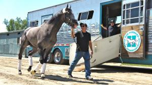 Arrogate Arrives Home to Hero's Welcome