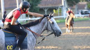 Top Ten Reasons People Love Horses