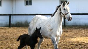 Cute Foals of the Week for Jan. 25