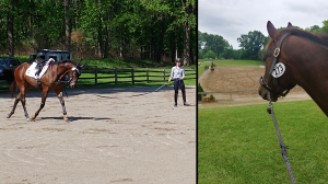 Thoroughbred Makeover Diary: Making Progress with OTTB Wex