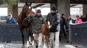 Seeing the Past and Future at Keeneland in January