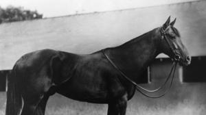 King Ranch: A Classic Racing Legacy