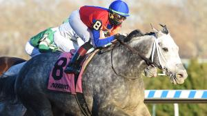 Life in Shambles wins the Fall Highweight Handicap at Aqueduct on Thanksgiving 2018.