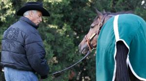 Hall of Fame trainer D. Wayne Lukas grazes Oxbow after a workout. Lukas saddled Oxbow to a victory in the 2013 Preakness Stakes.