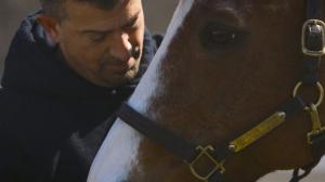 The Man O' War Project at Columbia University Irving Medical Center uses horses to heal veterans suffering from PTSD.