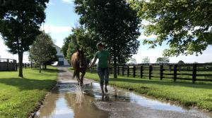Thoroughbred Makeover Diary: Making Progress