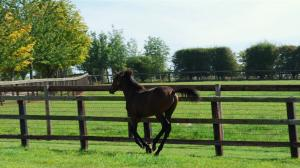 Cute Foals of the Week for May 28