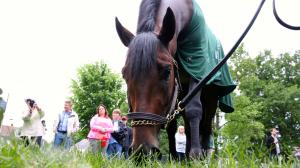 Nyquist Arrives at Pimlico for Preakness Training