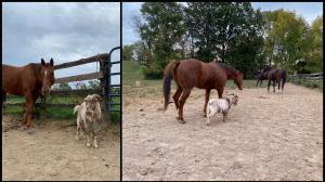 Thoroughbred Makeover Diary: A Look Back and a Love Story