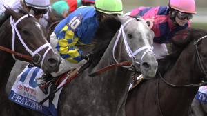 Gallant Gray Warhorse Praetereo Easing into Career as OTTB
