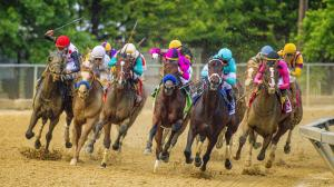 The field turns for home in the 2019 Preakness Stakes.