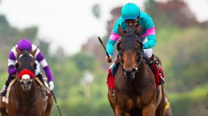 Royal Mo Picking Up Momentum on Kentucky Derby Trail