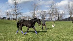 Thoroughbred Makeover Diary: Laying a Foundation for Saintly Ballad