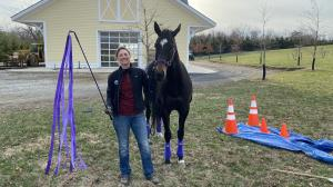 Thoroughbred Makeover Diary: Police Work Progress