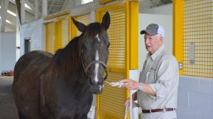Mares and Foals in Great Hands with Sebastian at Claiborne