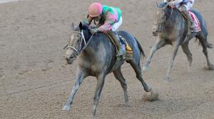 If you ask trainer Gary Contessa, the Nov. 2 Breeders' Cup Juvenile Fillies seems to be destiny for Spinaway winner Sippican Harbor.