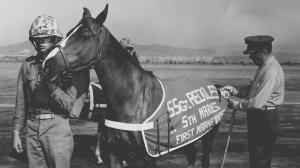 The Story of Sergeant Reckless: Korean War Horse Served with Valor