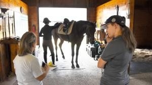 Thoroughbred Aftercare Alliance Accreditation an Involved Process