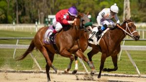 Dan's Double: Looking for Longshots at Tampa Bay Downs
