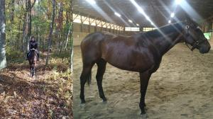 Entertaining Journey of Former Tampa Bay Derby Runner Chief Energy