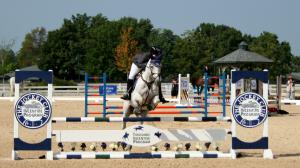 Thoroughbred Incentive Program Makes Big Strides for Retired Racehorses