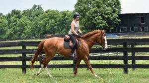 Thoroughbred Makeover Diary: Back in the Saddle with Thalia