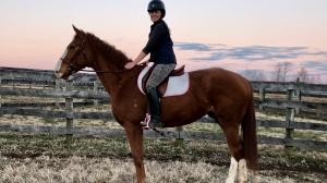 Thoroughbred Makeover Diary: OTTB Thalia, a Pony, and a Potbellied Pig