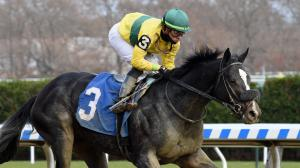 Three Technique is among the promising 3-year-olds stationed at Oaklawn Park this year.