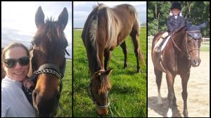 Thoroughbred Makeover Diary: One Step at a Time for Sheidy with Wex