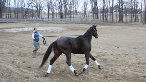Jessica Sheidy is working through some challenges with her OTTB Wex.