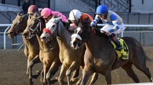 Best Bets: Saturday Stakes Plays at Aqueduct and Del Mar