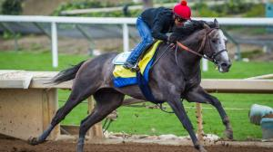 Horses to Know on the Dubai World Cup Card