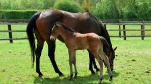 Cute Foals of the Week for March 19