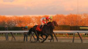 Five Reasons to Love Aqueduct