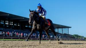 Making Money Betting Elate in the Personal Ensign