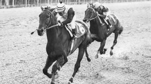 Fabulous Forego: Superstar of the Handicap Division