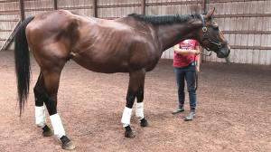 Thoroughbred Makeover Diary: First Things First, 'No Hoof, No Horse'