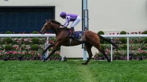 Getting To Know 2019 Breeders' Cup Classic Contender Japan