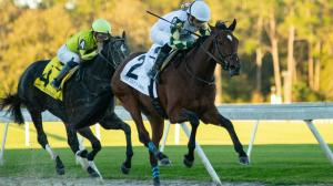 Finding a Price to Pair with Favorites in Tampa Bay Derby