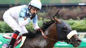 Getting to Know Breeders' Cup Classic Hopeful Tom's d'Etat