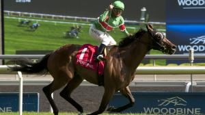 A Longshot Play for the Woodbine Mile