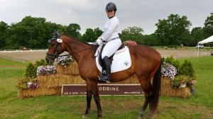 Thoroughbred Makeover Diary: Wex Shines at Dressage, Begins Hunter/Jumper Training