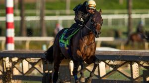 Five Breeders' Cup Horses to Consider at Attractive Odds