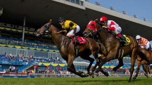 Motion Sees a Lot of Animal Kingdom in Untamed Domain