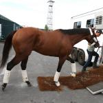 Maximum Security to Miss Pennsylvania Derby Due to Colic