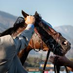 Getting to Know Breeders' Cup Contender Omaha Beach
